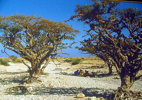 пейзажи Омана
