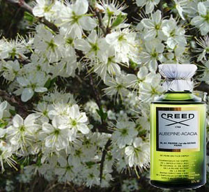 Aubepine Acacia Creed