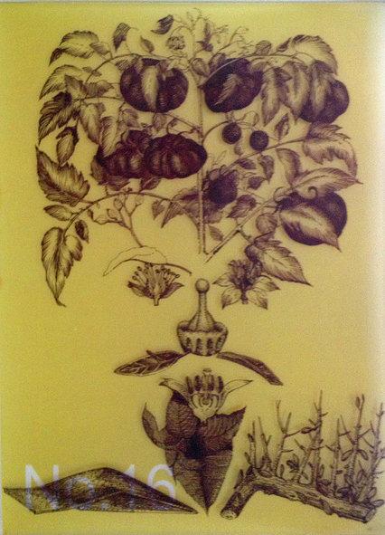 Scent No. 16 tomato leather Cognoscenti